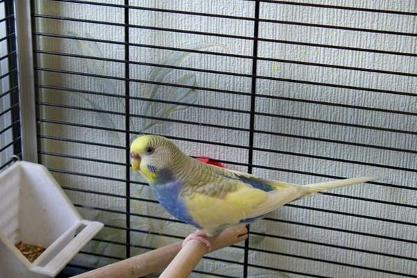 Породы попугаев с фотографиями и названиями