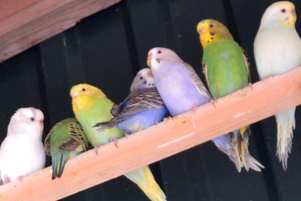 Попугаи разных оттенков