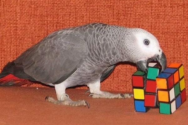Жако и головоломка