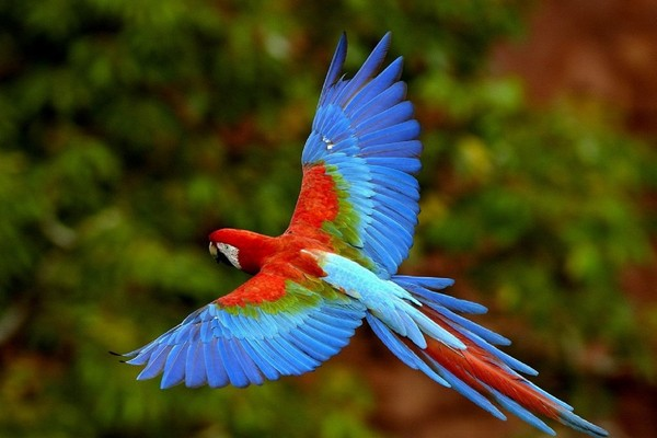 Птица пестрой окраски
