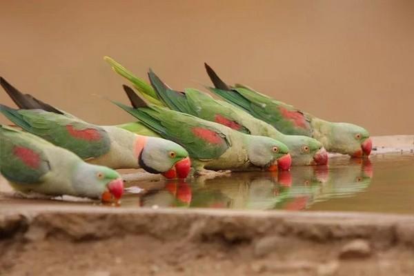 Птицы на водопое