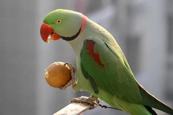 Попугай и корм