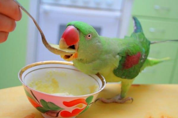 Сладости для попугая