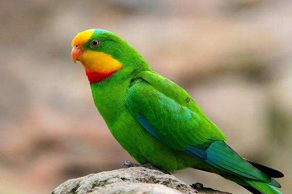 Попугай с яркой окраской
