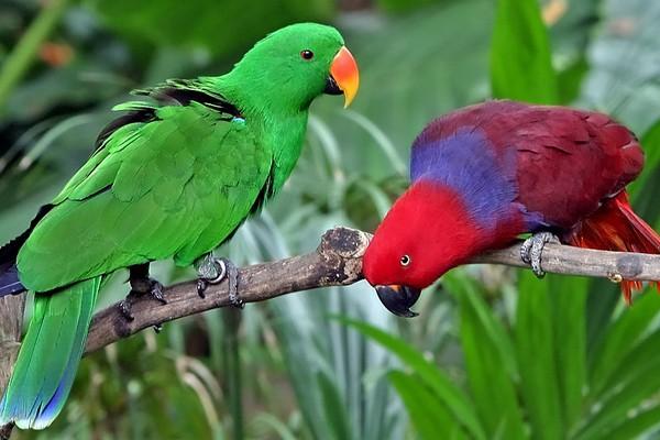 Попугаи с красивой окраской оперения