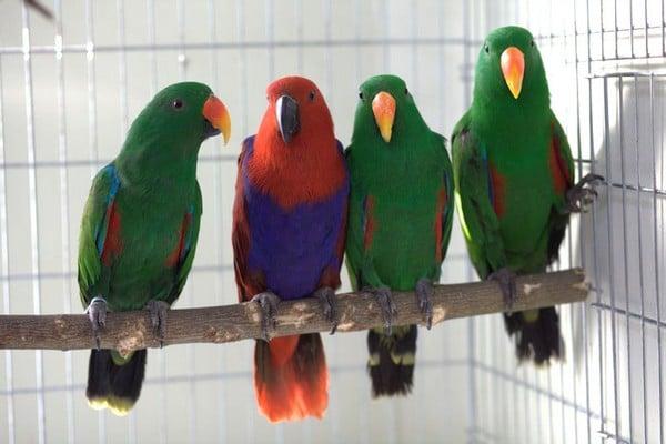 Сидящие кучкой попугаи