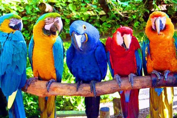 Сидящие рядом попугаи