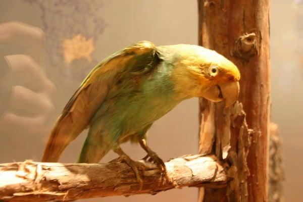 Редкая птица