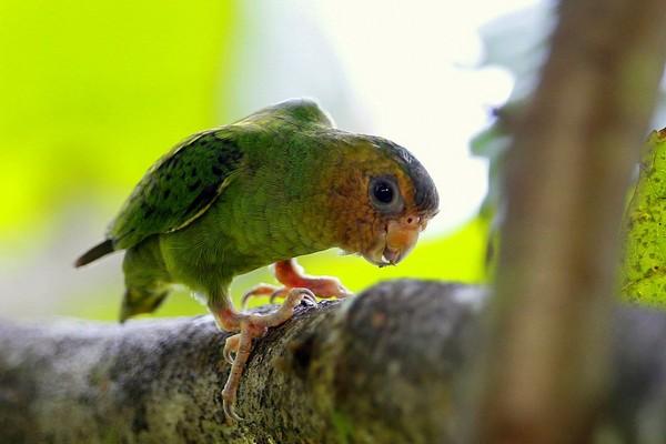 Небольшой попугайчик