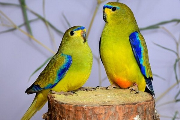 Птицы на пеньке