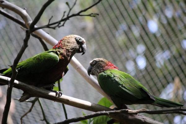 Птица с пестрой окраской