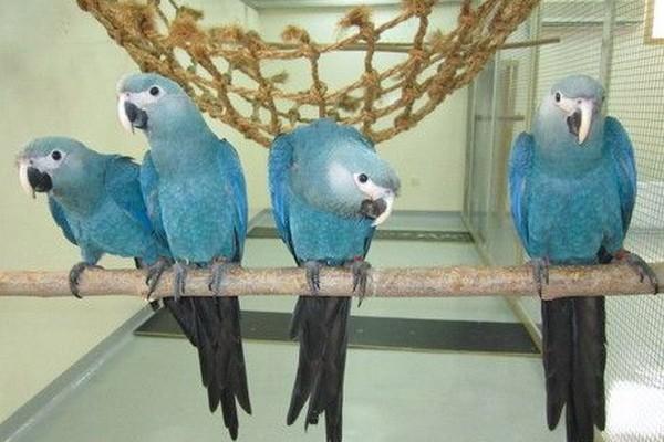 Сидящие в ряд птицы