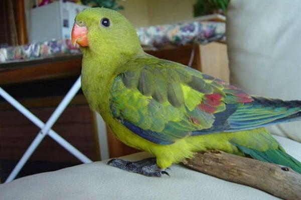 Птица на столе