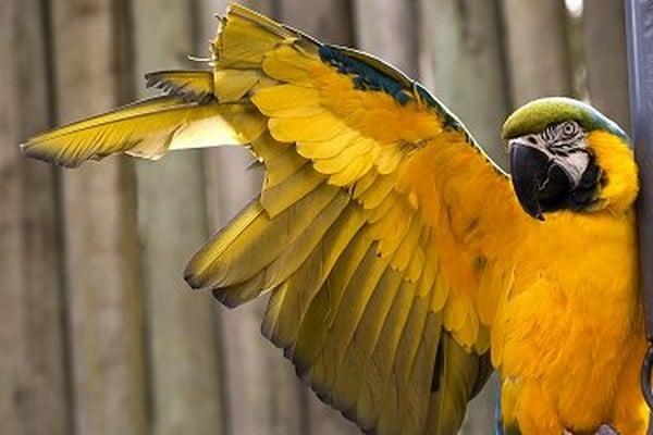 Травмированное крыло