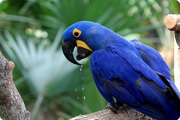 Дорогой попугай