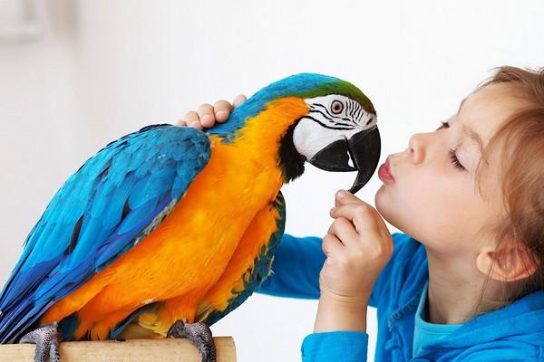 Попугай и ребенок