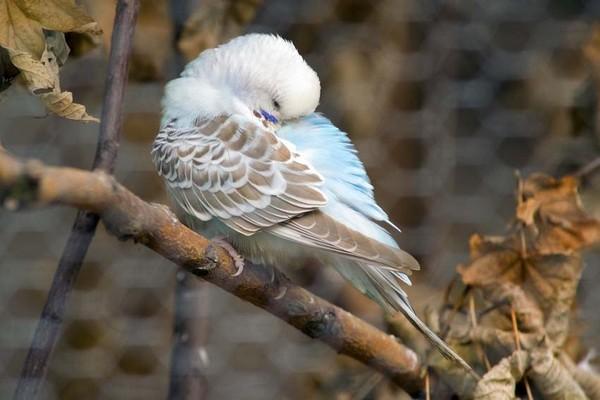 Птичка уснувшая на ветке