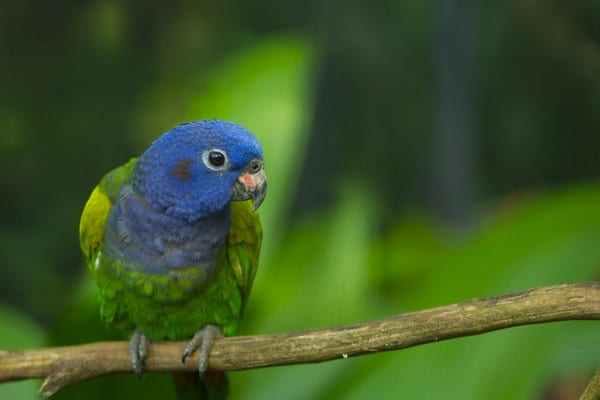 Приметный попугай