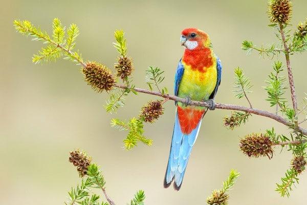 Яркий попугайчик