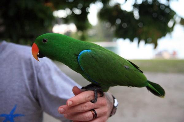 Птица на руке