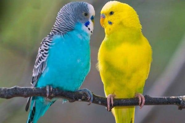 Пара птиц