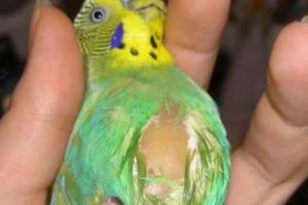 Попугайчик в руке