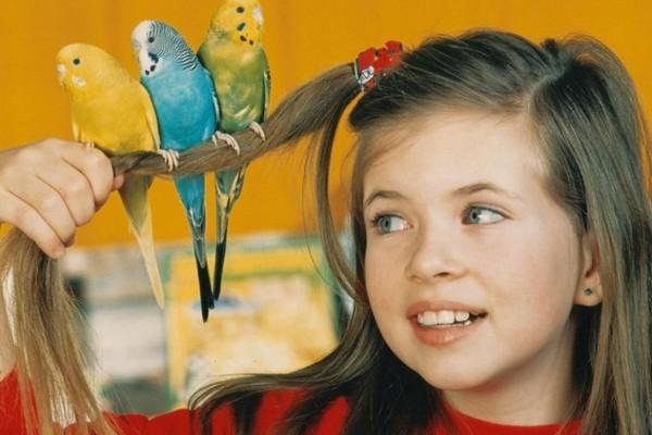 Ребенок и попугаи