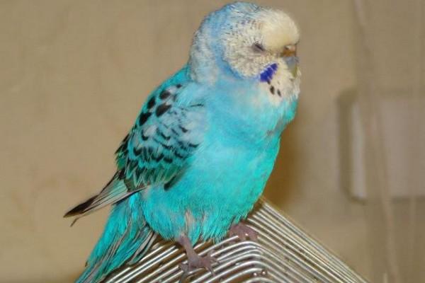 Птица на клетке