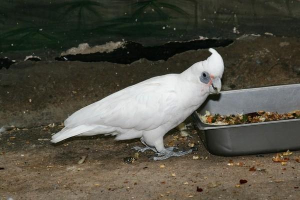 Птица у кормушки