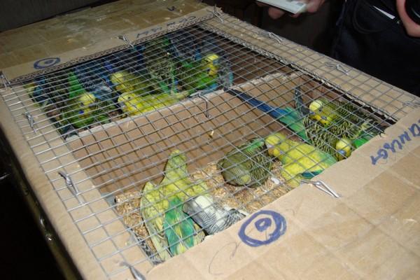 Транспортировка птиц