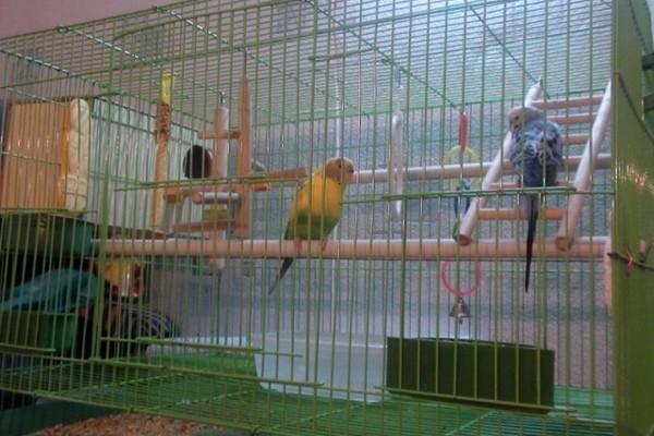 Клетка для пары попугаев