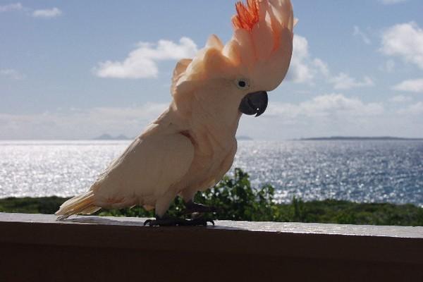 Попугай на поручне