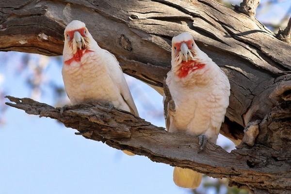 Приметные птицы