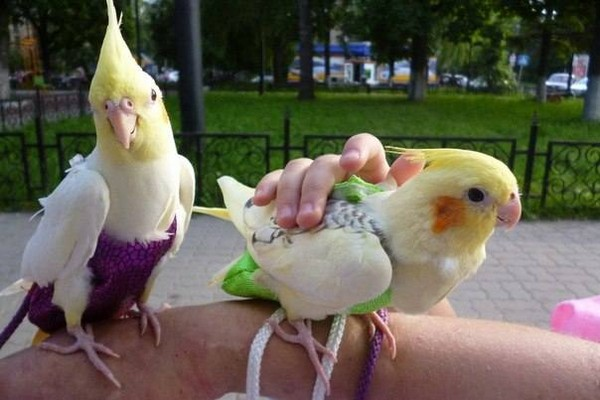 Птицы на прогулке