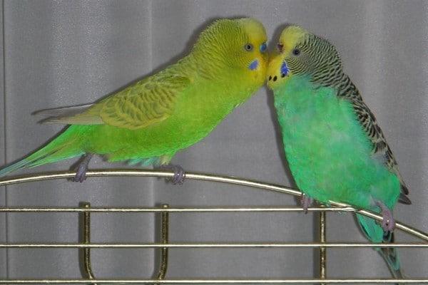 Птицы на клетке