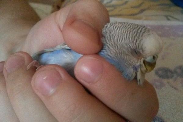 Попугай в руке
