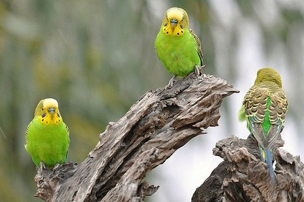 Птицы на коряге