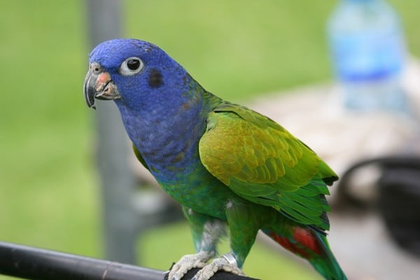 Птица с ярким оперением